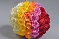 Trandafiri Florarie Iasi