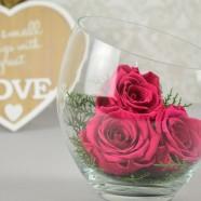 Trandafiri Criogenati Florarie Online Iasi
