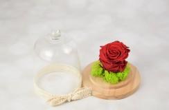 Criogenat Florarie Iasi
