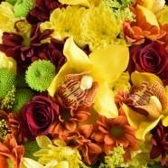 Crizanteme Florarie Iasi