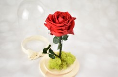 Trandafir Criogenat Florarie Iasi