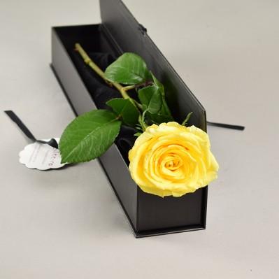 Trandafir Florarie Iasi