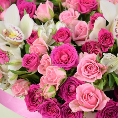 Miniroze Florarie Iasi
