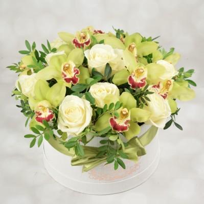 Florarie Iasi Dazzling