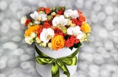 Florarie Iasi Miniroze
