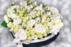 Florarie Iasi Hortensie