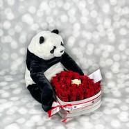 Trandafiri Panda Florarie Iasi
