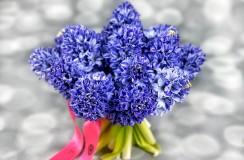 Zambile Florarie Iasi