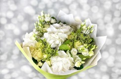 Hortensie Florarie Iasi